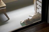 最近の猫事情59 - 鳥会えず猫生活