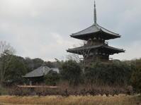 法起寺式と呼ばれる飛鳥時代の寺・法起寺 - 地図を楽しむ・古代史の謎