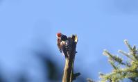 涼を求めて戦場ヶ原へ - 鳥観望遠鏡
