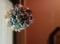 紫陽花玉の香り… - 侘助つれづれ