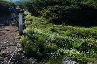 旭岳から間宮~裾合平までお花見周遊ハイキング♡お花編 - へっぽこあるぴにすと☆