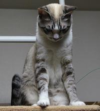 遊んでみた - ぎんネコ☆はうす