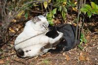 松山総合公園猫② - かたくち鰯の写真日記2