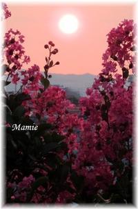 夕陽と百日紅と紅い星 - おだやかに たのしく Que Sera Sera