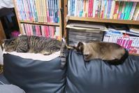 縦列猫 - 猫+ねこ+ネコのつれづれ