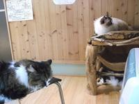 村上RADIO - シェークスピアの猫