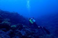 18.8.3嵐は去った - 沖縄本島 島んちゅガイドの『ダイビング日誌』