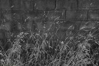 Dry Weeds - フォトな日々