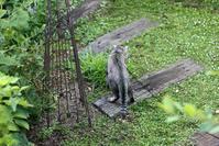 猫草と言う名の雑草 - 小さな森のキキとサラ