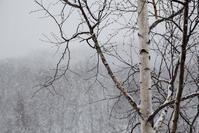 ただ、雪の降り積む - memory