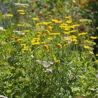 夏のお庭② - sola og planta ハーバリストの作業小屋