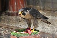 江戸川区自然動物園の多彩な鳥たち - 続々・動物園ありマス。