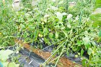 台風が来た!今年こそ! - 畑であそぶ ~のんびり家庭菜園・畑しごと~