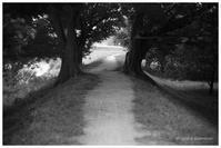 川沿いの道 - BobのCamera