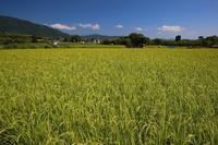 京都市西京区大原野 - 写真を主とした日記です