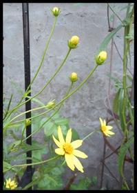 夏の花 - 小さな幸せ