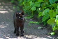 松山総合公園猫④ - かたくち鰯の写真日記2
