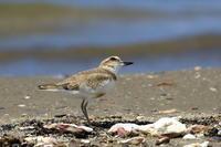 夏の水辺2 - 綺麗な野鳥たち