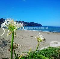花の咲く風景 - surftrippper サーフィンという名の旅