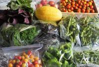 ■菜園発【先日畑の野菜ほぼ全種類を東京の娘夫婦に送りました。】 - 「料理と趣味の部屋」