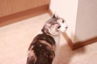 帰省してきました - きょうだい猫と仲良し暮らし