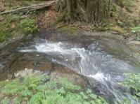 七滝(葛巻町) - 日頃の思いと生理学・病理学的考察