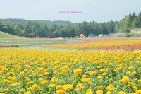 富士見高原リゾート - Photographie de la couleur