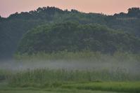蒲のある夏の朝 - 東大寺が大好き