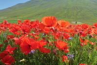 夢の花目と心かけ咲かせよう、英語版瞑想講座と花の高原 - イタリア写真草子 Fotoblog da Perugia