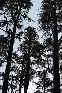 2018.07自宅近くの公園で空を見上げる - ゆらりっぷ -yurari's trip-