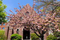桜咲く京都2018同志社礼拝堂の八重桜 - 花景色-K.W.C. PhotoBlog