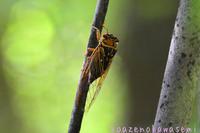 虫撮り - 気ままな生き物撮り