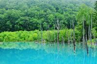 朝霧の青い池 - slow life-annex
