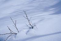雪のいろ - memory