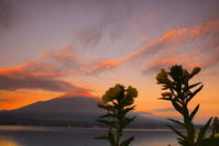 30年8月の富士(5)長池親水公園の富士 - 富士への散歩道 ~撮影記~