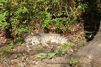 松山総合公園猫⑤ - かたくち鰯の写真日記2