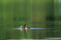 夏の水辺 3 - 綺麗な野鳥に遭いたくて