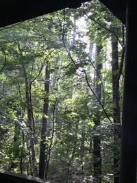 新生姜の甘酢漬け - 木洩れ日の森から