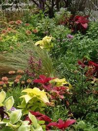Una parte este de mi jardin. - Gardener*s Diary