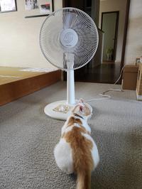 扇風機大好きウタちゃん♪ - ☆kumi.cr日記☆