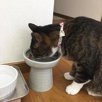 吐き戻しが多いネコのためのフード入れ - キジシロ猫のいる暮らし 〜トム〜