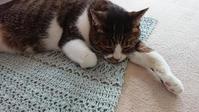 フラックスcがお気に入り♪~麻と綿で編む毎日ニット~ - 空色テーブル  編み物レッスン