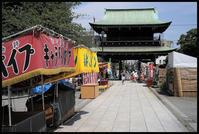 風鈴市 -8 - Camellia-shige Gallery 2