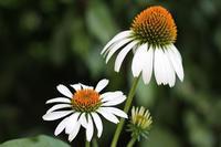 盛夏の庭 - 絵と庭