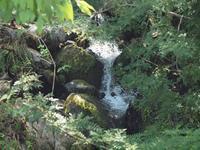 『阿弥陀ヶ滝(あみだがたき)の涼風を・・・・・』 - 自然風の自然風だより