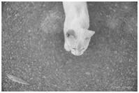 白猫 - BobのCamera
