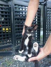 7月 活動報告 - 陽だまり猫の会