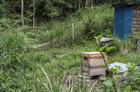 巣箱の引越し - 良え畝のブログ