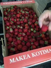 イチゴ - フィンランドでも筆無精