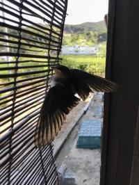 いい日 巣立ち - 島暮らしのケセラセラ